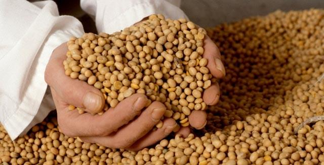Empalme prematuro de cosechas genera fuerte baja de precios
